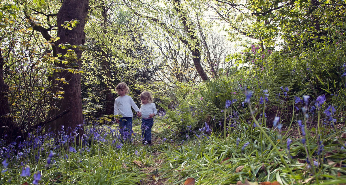 Outdoor portrait photography in the bluebells