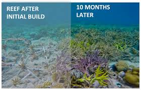 coral reef rebuild